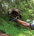 A falcon bird sits on a gloved hand. Falconry. Summer, forest