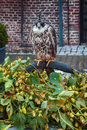 Falcon in castle garden seasonal Royalty Free Stock Images