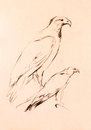 Falcon sketch Royalty Free Stock Photo