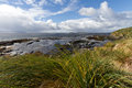 Falkland island coastline with tussac grass Royalty Free Stock Image
