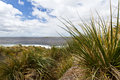 Falkland island coastline with tussac grass Stock Images