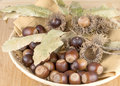 Fall acorns as a decoration in a basket Royalty Free Stock Photo