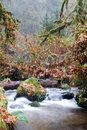 Fall Autumn Forest Stream Bubbling Brook Mossy River Royalty Free Stock Photo