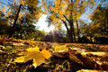 Fall autumn park. Falling leaves Stock Image