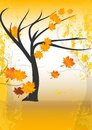 Fall or autumn tree with leaves Stock Images