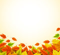 Fall background for autumn season with collection of orange and yellow maple leaves Royalty Free Stock Photo