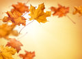 Fall background with falling autumn leaves
