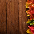 Fall background with leaves Stock Photography