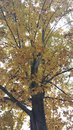 Fall beauty ohio leaves falling glorious colors Stock Photography
