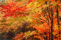 Fall in the Blue Ridge Mountains Royalty Free Stock Photo