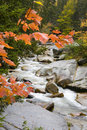Fall Brook Royalty Free Stock Photography