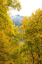 Fall changing to winter in The Great Smoky Mountains. Royalty Free Stock Photo