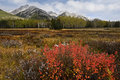 Fall color in canadian rockies banff national park alberta canada Royalty Free Stock Image