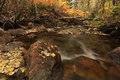 Fall color by a stream in the Utah mountains. Royalty Free Stock Photo