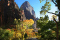 Fall color in Zion National Park Royalty Free Stock Photos