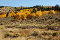 Fall in colorado view of the countryside with golden aspen and dark green fir trees Stock Photography