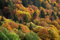 Fall colors Royalty Free Stock Images