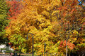 Fall colors Royalty Free Stock Photo