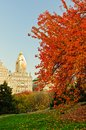 Fall colors at Central Park. Royalty Free Stock Photo