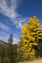 Fall Colors Colorado Stock Photography