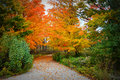 Fall colors driveway gorgeous display of leaves orange green yellow trees with a leading your eye through the picture this photo Royalty Free Stock Photography