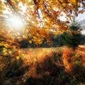 Fall Colors Garden