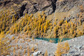 Fall colors in high mountain. Alpine lake with yellow larch trees. Ayas valley, Aosta Italy Royalty Free Stock Photo
