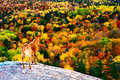 Fall colors from hogback mountain in marquette michigan Royalty Free Stock Photo