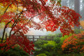 Fall Colors by the Moon Bridge in Portland Japanese Garden in Oregon Royalty Free Stock Photo