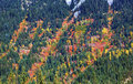 Fall colors mountain sides forest stevens pass washington leavenworth Royalty Free Stock Photography
