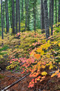 Fall Colors in North Cascades National Park Royalty Free Stock Images