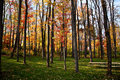 Fall Colors in Pennsylvania Woodlands Royalty Free Stock Photography