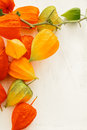 Fall colors physalis blossoms on white wooden background Royalty Free Stock Photography