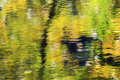 Fall Colors Reflection Abstract Wenatchee River Washington Royalty Free Stock Photo