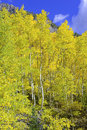 Fall colors in the Rocky Mountains, USA Royalty Free Stock Photo