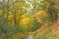 Fall Colors on a Western Mountain Trail Royalty Free Stock Photo