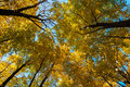 Fall colours and blue sky Royalty Free Stock Photo