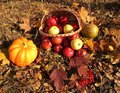 Fall cornucopia apples in a basket and pumpkin harvest festival Stock Photography