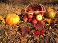 Fall cornucopia apples in a basket and pumpkin harvest festival Stock Photo