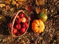 Fall cornucopia apples in a basket and pumpkin harvest festival Stock Photos