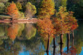 Fall Cypress Trees Water Reflection Royalty Free Stock Photo