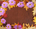 Fall Flower Frame Royalty Free Stock Photo