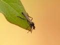 Fall Fly On Leaf