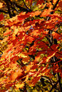 Fall foliage Stock Photography