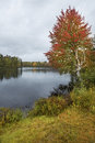 Fall foliage on the androscoggin river near errol new hampshire along a curved shoreline of a rainy day Stock Images