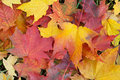 Fall foliage background Royalty Free Stock Photo
