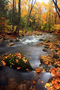 Fall foliage and clear stream Stock Images