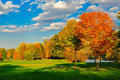 Fall foliage and a field. Royalty Free Stock Photo