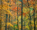 Fall foliage great smoky mountains national park tennessee Stock Photo