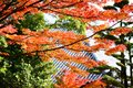 Fall Foliage of Japan Royalty Free Stock Photo